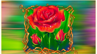 Good Morning Red Rose Images